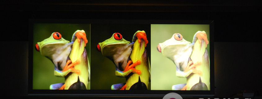 See the difference our triple strike method produces, everyone else in town prints backlit like the frog on the right, Signs for Success produces full color like the one on the left, come see us now for a fast quote